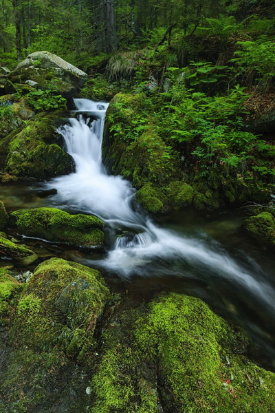Buta stream